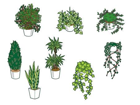 Houseplant set 2