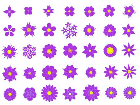 보라색 꽃 세트