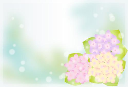 Hydrangea Frame 7