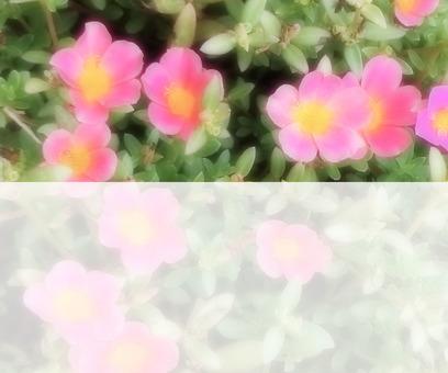 Flower message card 9-B