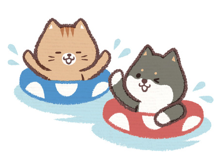Black Shiba Inu Cat Water Play