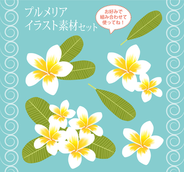 Plumeria illustration material set