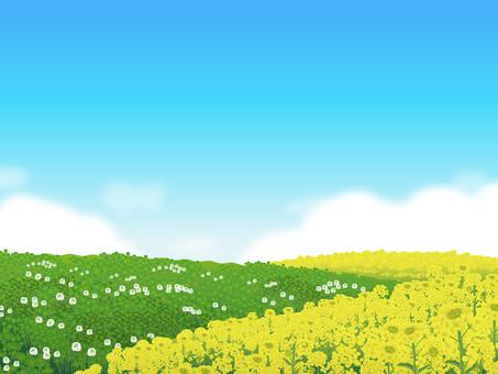 Nanohana and Clover's blue sky Hara Plant Landscape 05