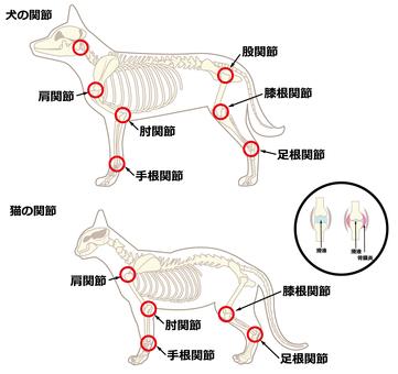 개와 고양이 관절염