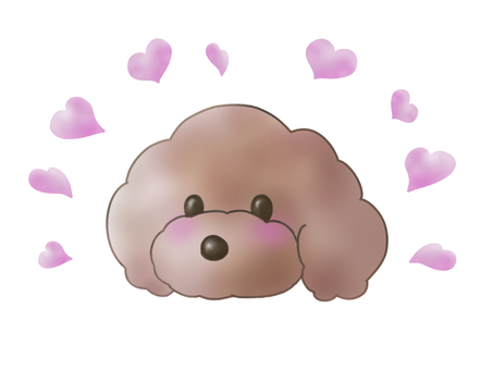 Toy poodle face heart