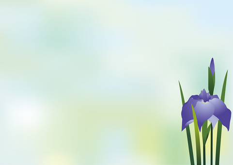 Iris flower 16