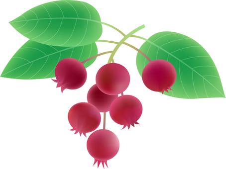 June berry