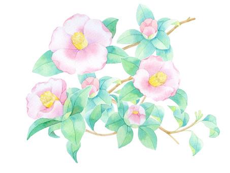 Camellia pink ★ 0452-F