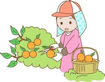 Mandarin farmer