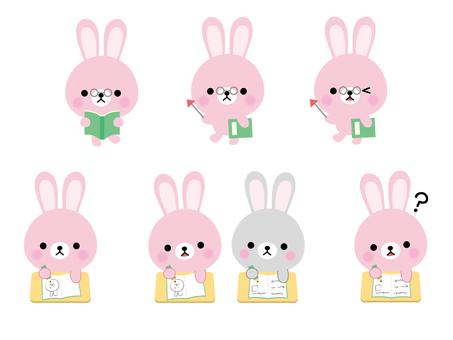 Rabbit study conclusion