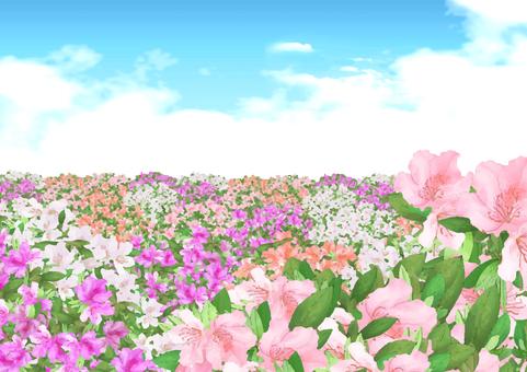 Azalea background