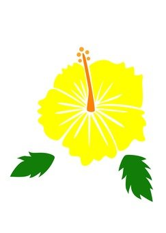 Hibiscus (yellow)
