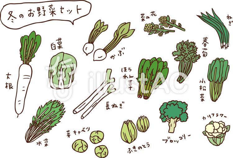 冬のお野菜セット カラーのイラスト