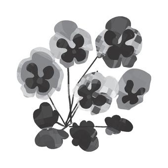 흑백 팬지