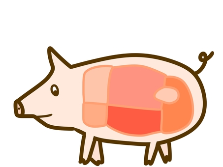 Pig cross section