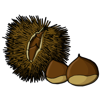 밤 / 밤 / Chestnut