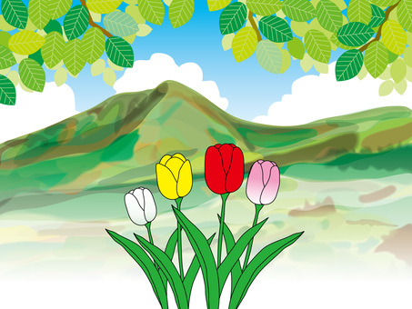 Tulips and mountains (4)