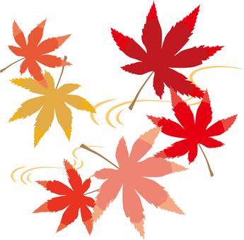 Autumn leaves 19