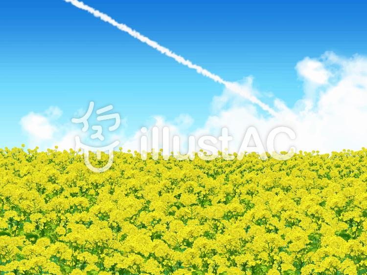 菜の花畑と飛行機雲イラスト No 1036071無料イラストなら