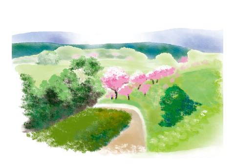 Sakura and Satoyama