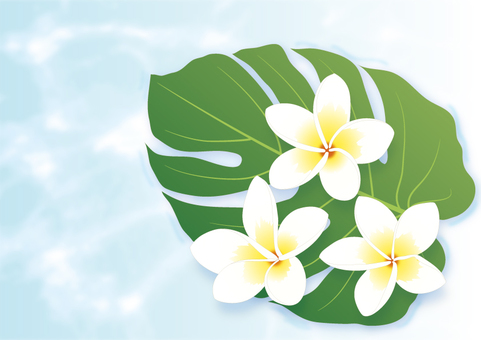 Plumeria and Monstera