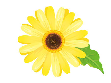 노란 거베라 꽃 스크랩