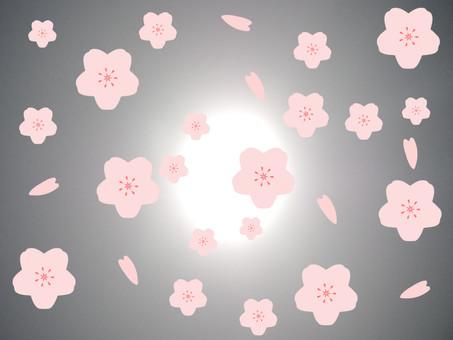 櫻花在柔和的光線下,跳舞的花瓣