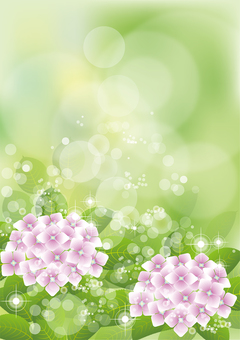 Green & hydrangea 22