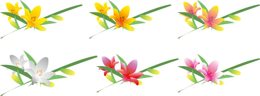 Lily flower set
