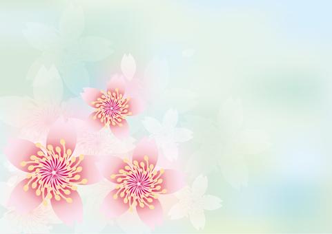 Blooming flowers 234