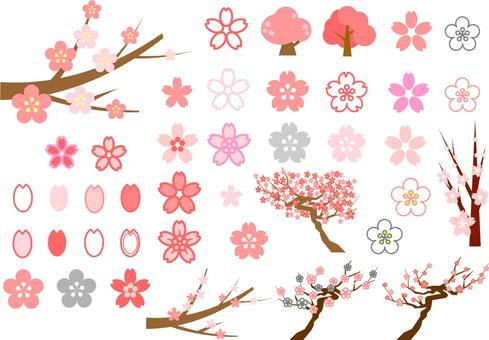 Plum and cherry blossom set