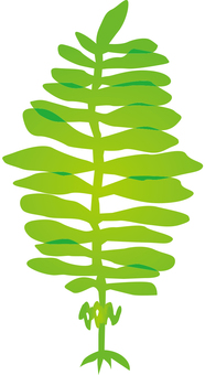 Seaweed d_v 8