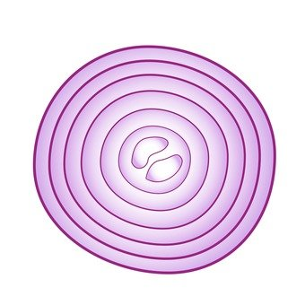 Cross section of red onion
