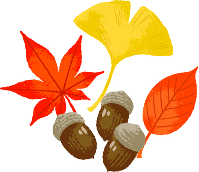 Fallen leaves and acorns