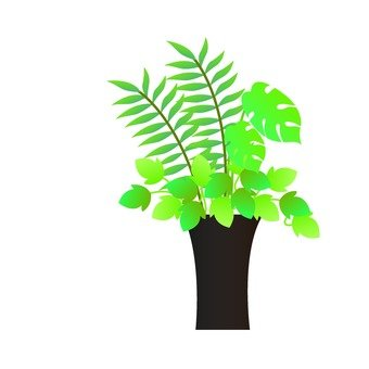 Houseplant - Positioning (table palm)