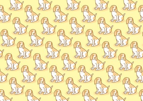 dog_ Beagle dog 22