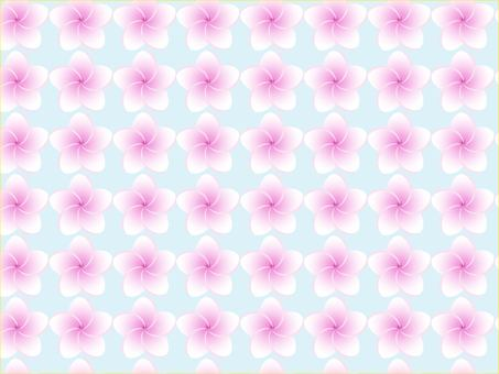 플루 메리아 꽃들
