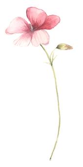 小花 - 開花