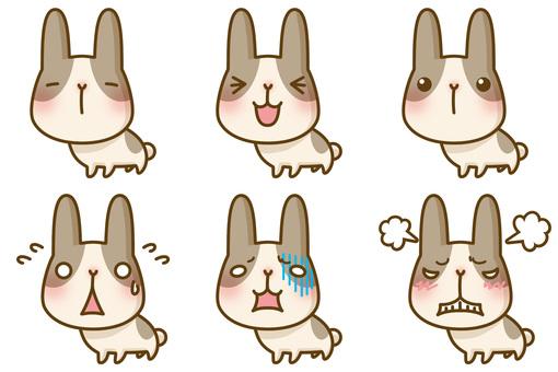 Rabbit expression set
