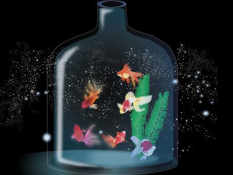 Aquarium 17