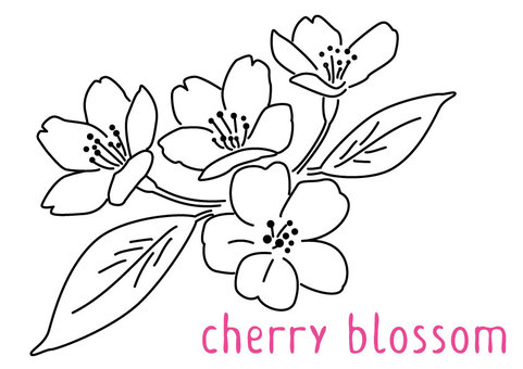 Monochrome realistic sakura flower