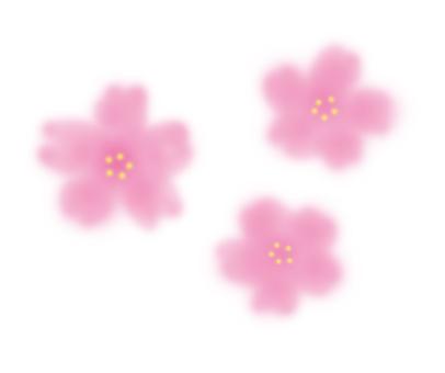 벚꽃 피는