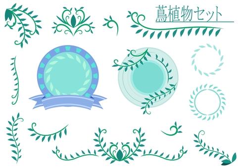 蔦植物セット