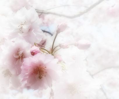 Flower message card 7-A