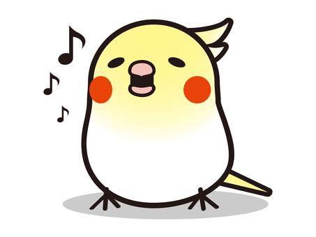 Singing cockatiel