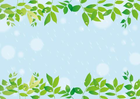 Fresh green and rain scenery