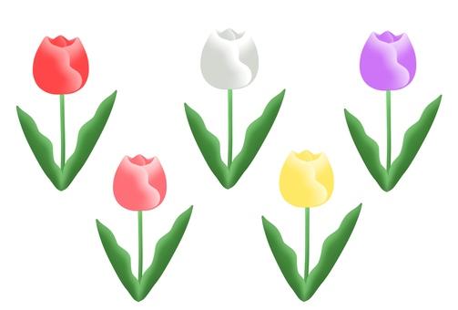 Tulip (5 colors)
