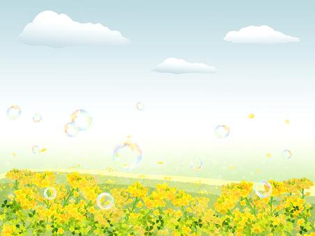 유채 꽃의 풍경