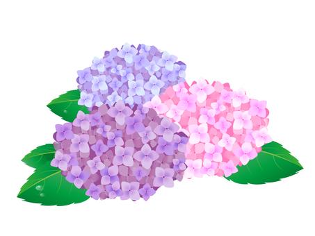 수국의 꽃 6