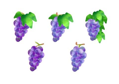 Watercolor grape material